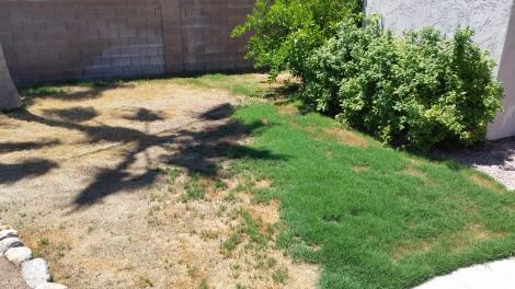 Luke's backyard 1
